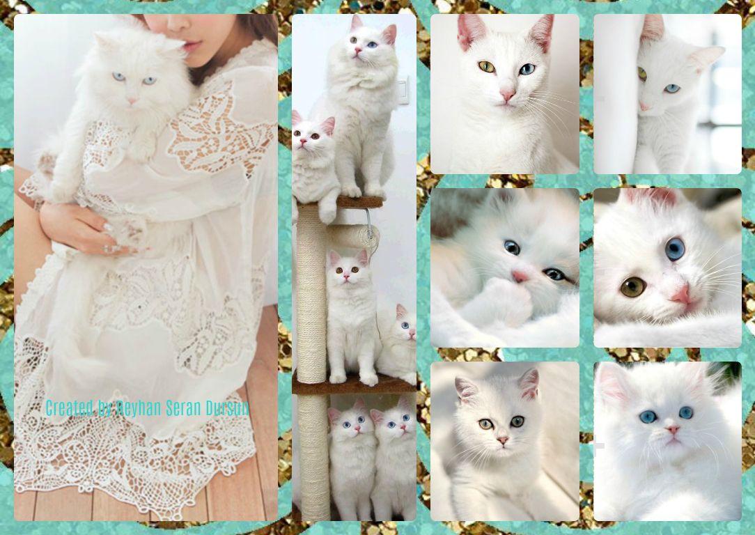 '' Cute White Cats '' by Reyhan Seran Dursun