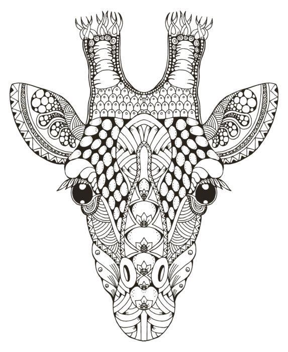 giraffe ausmalbild erwachsene  tier ausmalbilder