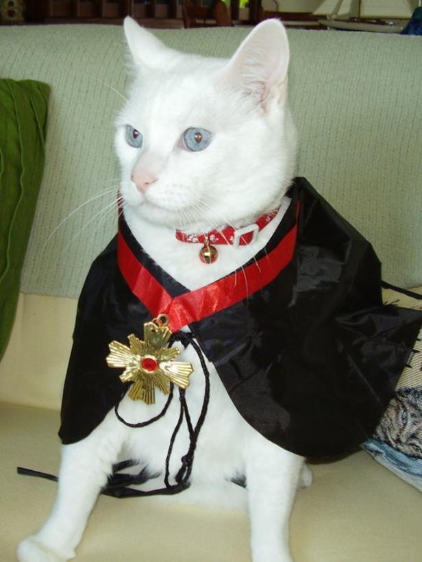 19 Diy Dog Costumes Cat Costumes For Halloween Pet