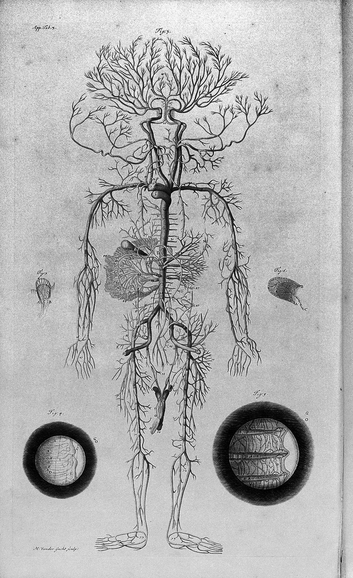 COWPER, William {1666-1709} W. Cowper, The anatomy of humane bodies ...