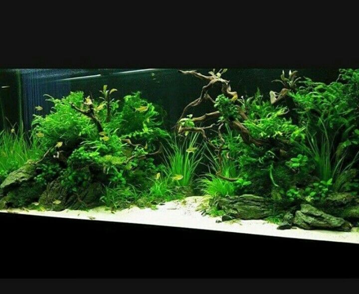 50 Stunning Aquascape Design Ideas (With images ...