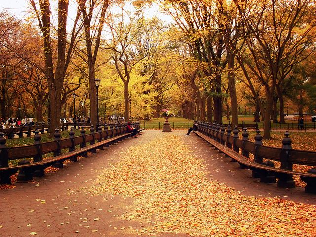 Fall is officially here! Central Park :-)