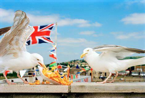 Martin Parr, GB. England. Westbay, 1996