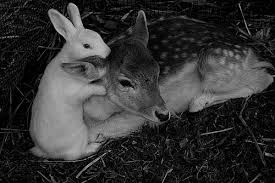 Image result for images interspecies friendships