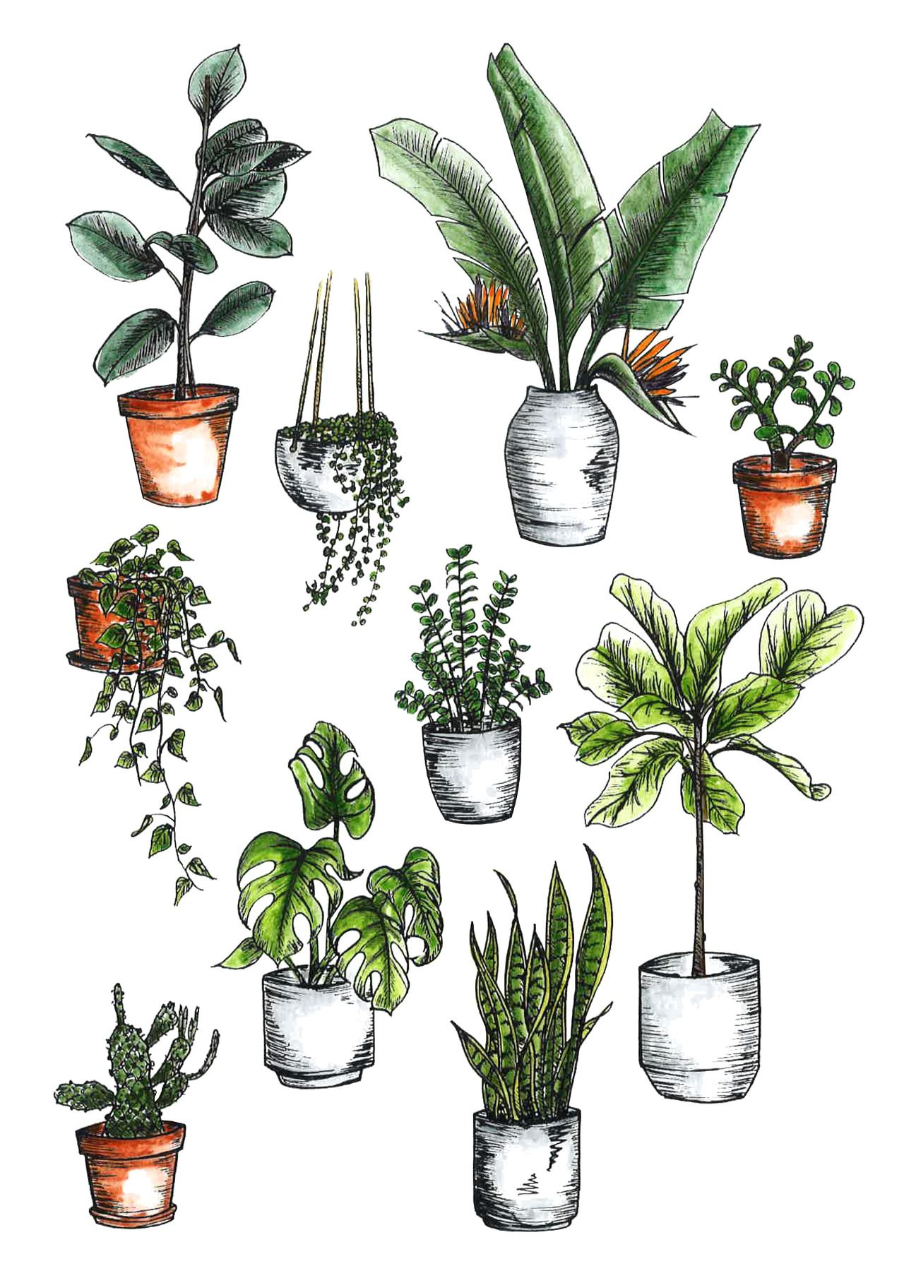 How to Care for Indoor Plants -   17 indoor plants Watercolor ideas