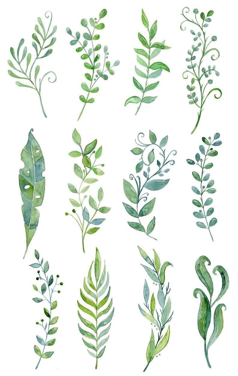 Watercolor Leaves Leaf Foliage Greenery Flowers Floral Clipart Cards Wedding Green Download Free Commercial Use Png In 2020 Floral Watercolor Watercolor Flowers Flower Drawing
