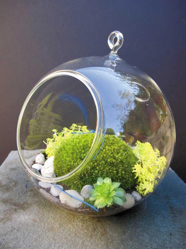 Love this terrarium container!