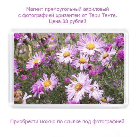 Магнит акриловый с хризантемами Линейка товаров с фотографией хризантем Эти хризантемы сфотографированы в период заморозков когда осенние цветы особо пышны И вполне досто...
