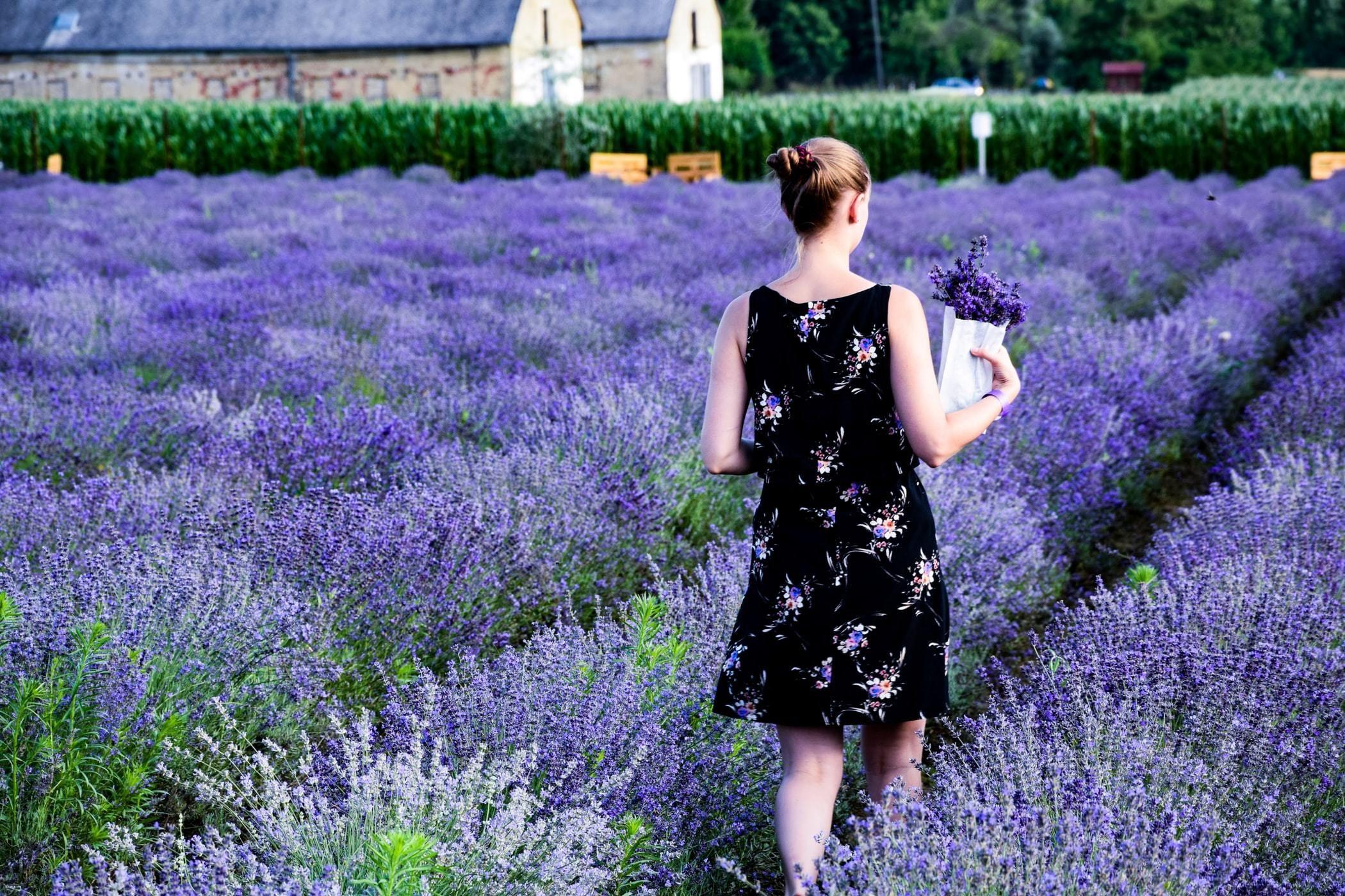 Benefits Of Lavender In 2020 Lavender Benefits Lavender Hair