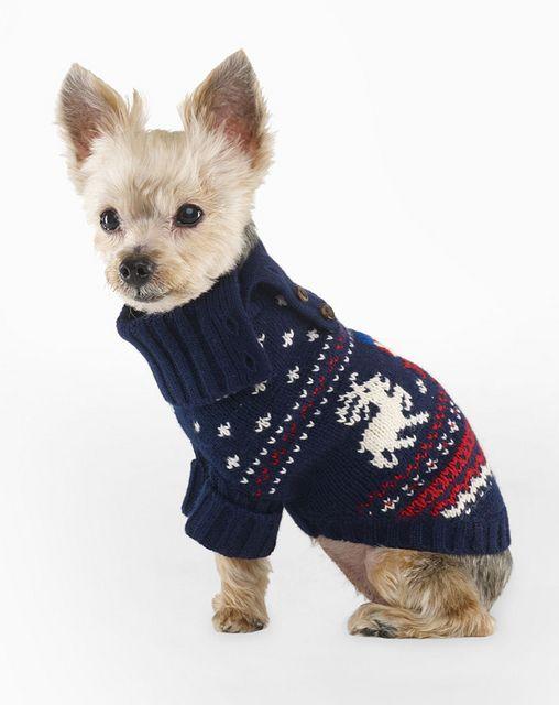 Ralph Lauren Reindeer Dog Sweater By Drollgirl Via Flickr Animal