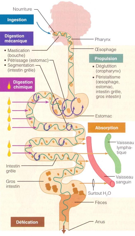 Premier nutrition corp