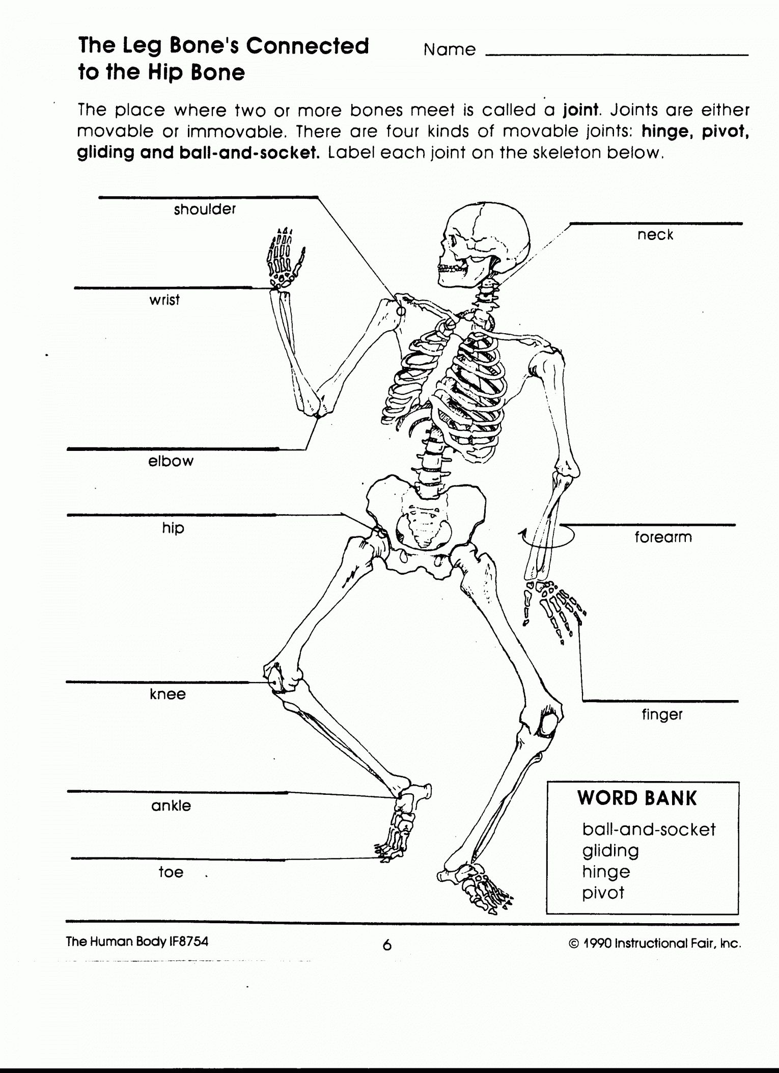 hight resolution of 12 Human Body Worksheets For 5Th Grade   Human body worksheets