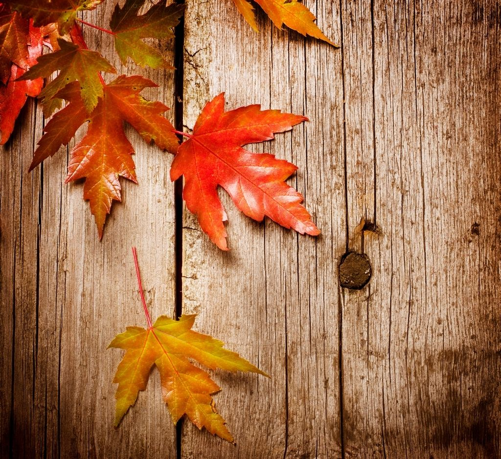 Flirting with fall how to get in an autumn mood autumn fall wallpaper voltagebd Image collections