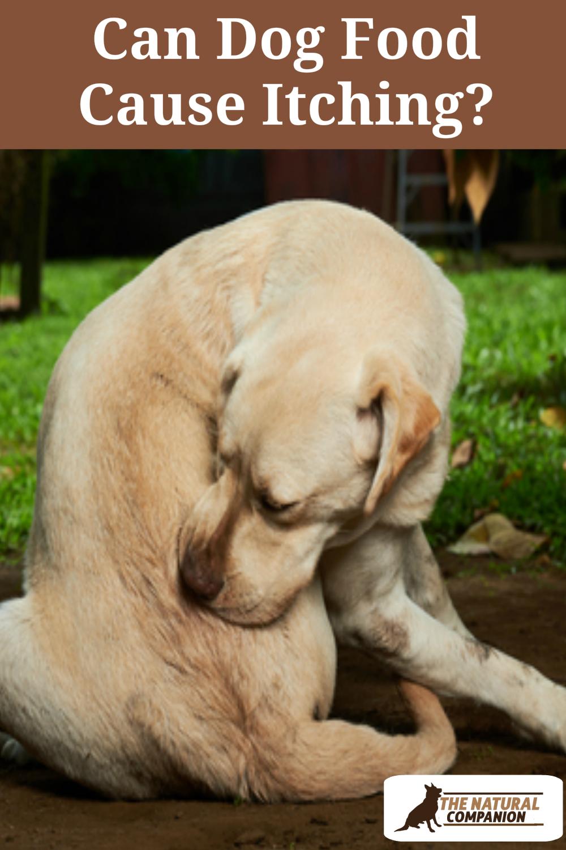 d8758aa49235e8cc739d37ca1634b3d7 - How Can I Get My Dog To Stop Scratching Himself