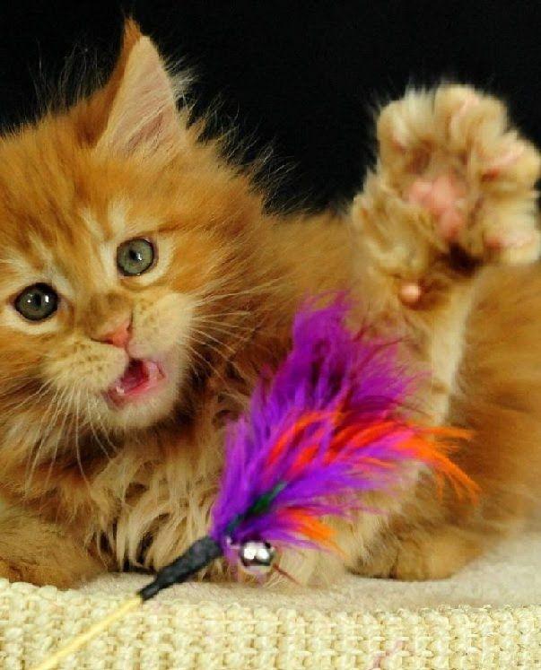 Gatos Lindos Y Tiernos Jugando Compilacion En Video De Gatos