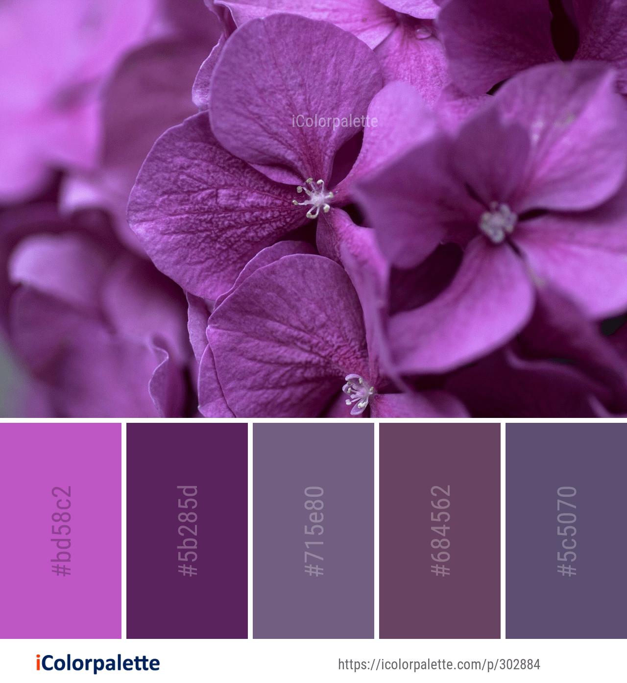 стоит цвета фиолетовый и сиреневый фото меня время