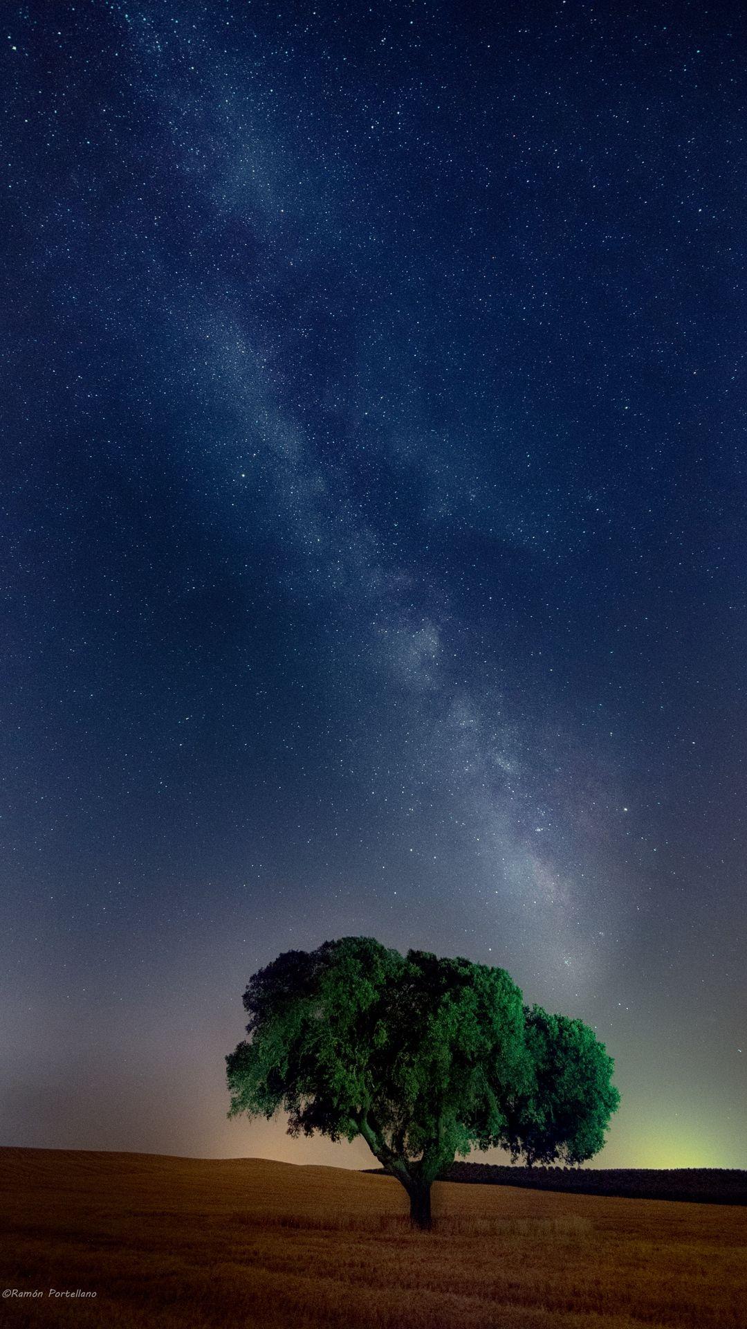 Starry Sky Trees Night Wallpaper Gelap Estetika Malam Fotografi Langit