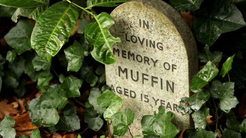 Stop Burying Your Pets in the Backyard | Pet cemetery ...