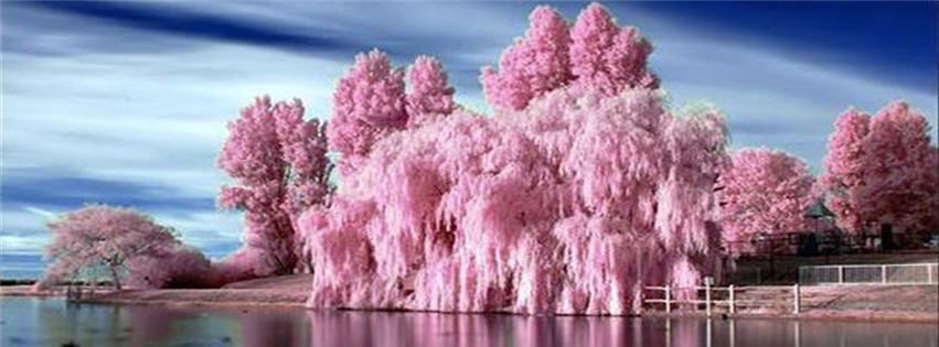 Free Profile Pictures For Facebook Magic Photo Free Pink Facebook Cover Photo Facebook Covers Pink Trees Nature Photography Beautiful Nature