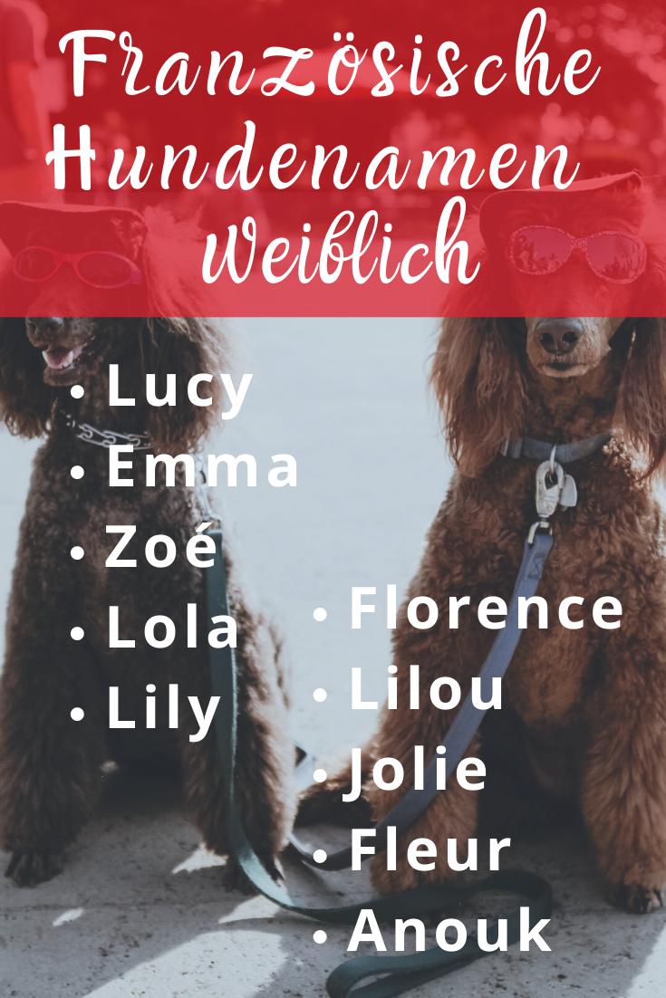 20 französische Hundenamen, weiblich und männlich mit