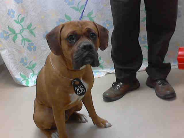 Texas Id A399032 Is Boxer At The Shelter Since 2 11 14 In Need Of A Loving Adopter Rescue At Harris County Public Furry Friend Pets Cute Little Things