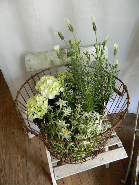 Fiori - Flowers and more ...: Sommergrüße Hallo ihr Lieben, sehr lange habt ihr ... #herbstdekoeingangsbereichdraussen