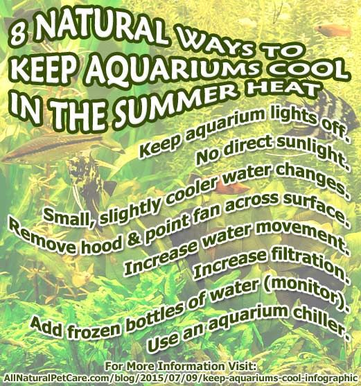 Natural Ways To Keep Aquariums Cool With Infographic