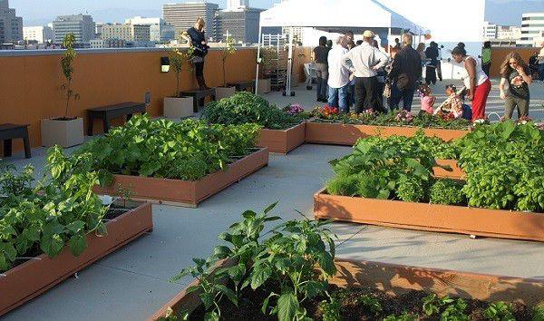 Alternativas de negocio: Azoteas Verdes  Divertidas ideas de negocio para hacer nuestra ciudad más verde.