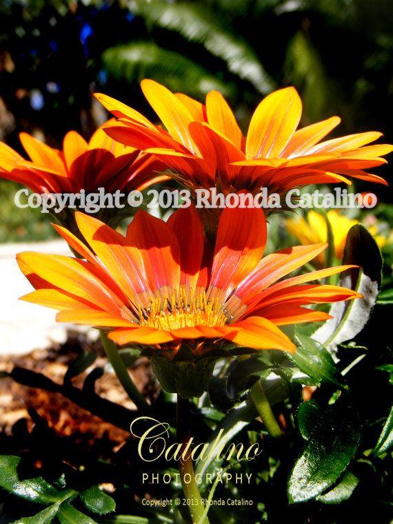 Daisy 170   Orange U0026 Yellow Flower   Home Decor   Wall Decor   Still Life