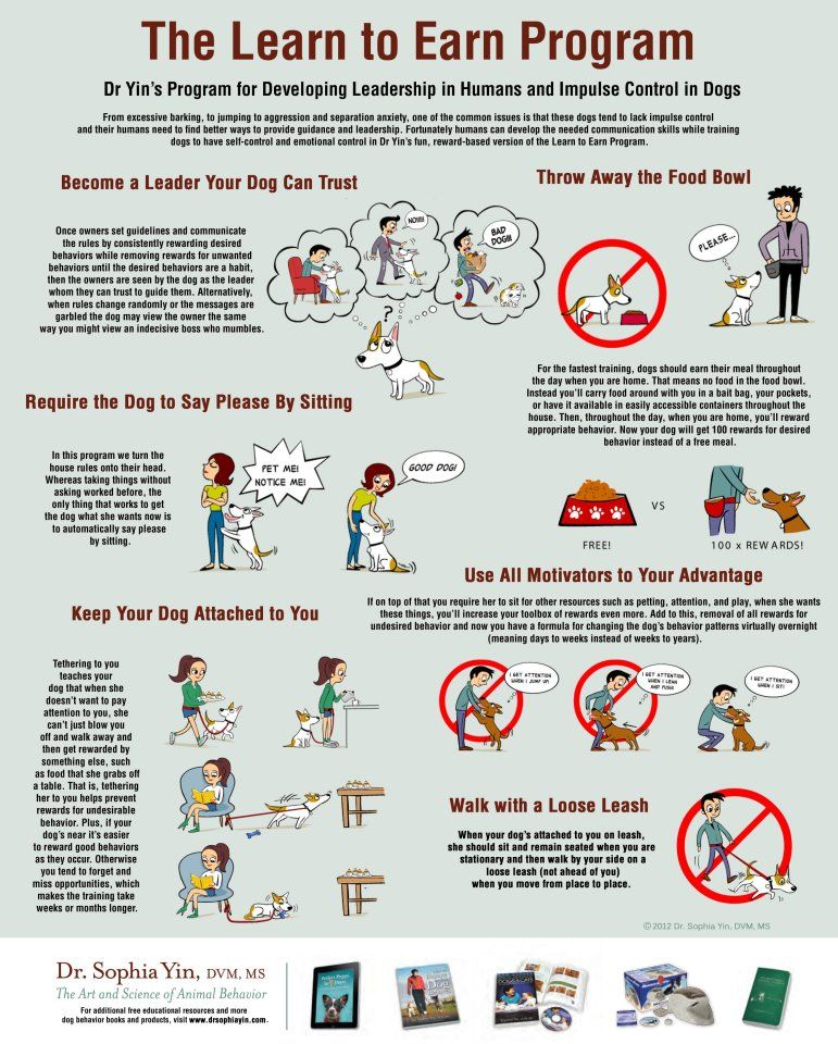 The Learn To Earn Program Dog Training Dog Behavior Dog Minding