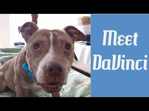 Meet Davinci Life In The Dog House Sickly Abused Senior Dog Makes Nine Dog House Dogs Animal Antics