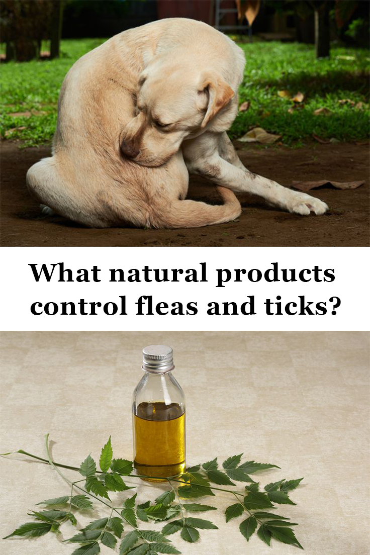6 Natural Flea Remedies For Cats And Dogs Natural Flea Remedies Fleas Flea Remedies
