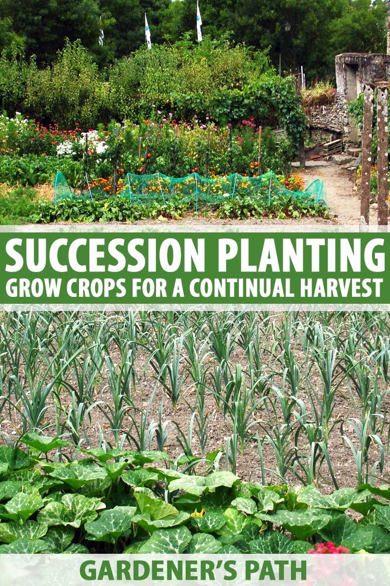 Succession Planting: How to Grow Crops for a Continual Harvest