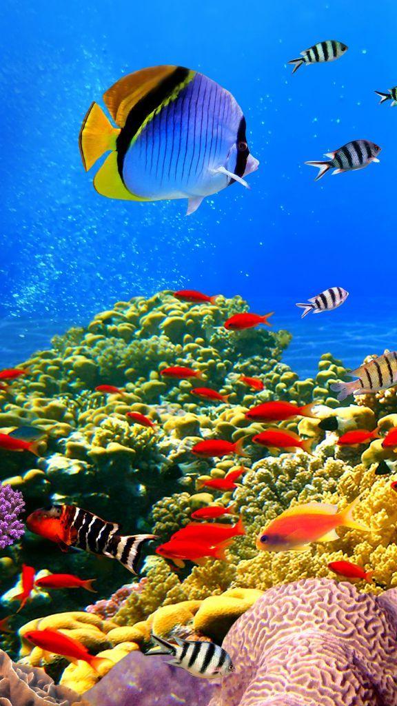 Under Water iPhone Wallpaper underwater iphonewallpaper