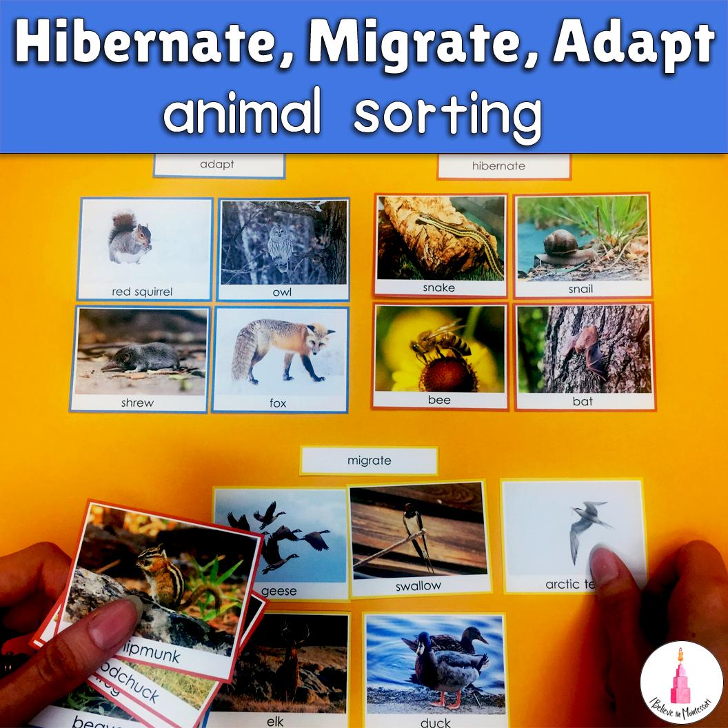 Hibernate Migrate Adapt