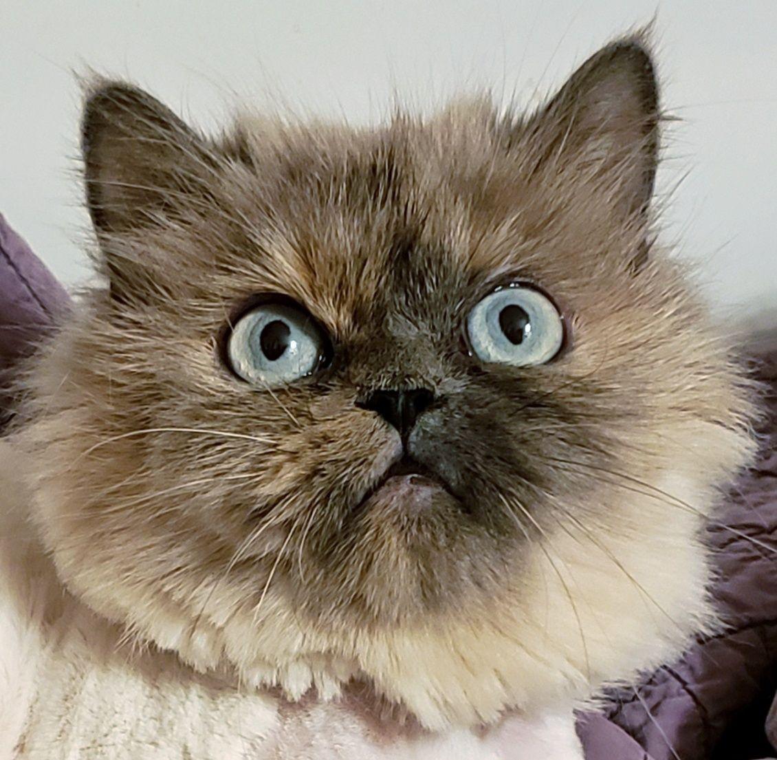 Adopt Belle on Pet care tips, Pet adoption, Pets