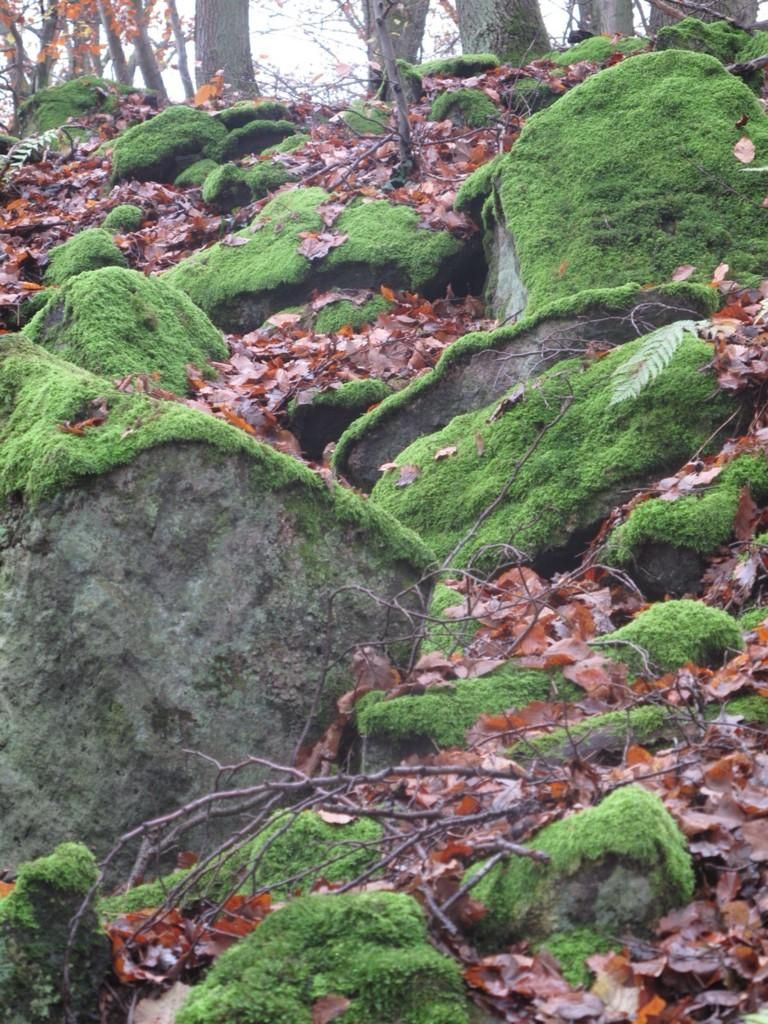 Moss-covered basalt blocks. The fascinating remains of a quarry from Roman times. Close to Andernach.