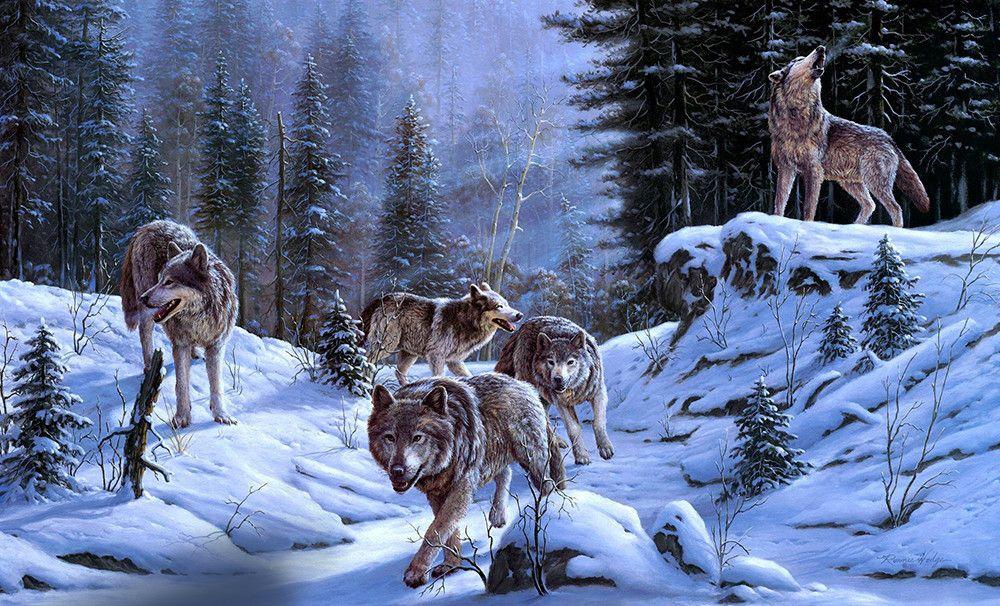 Волки зима пейзаж картинки собраны фотографии