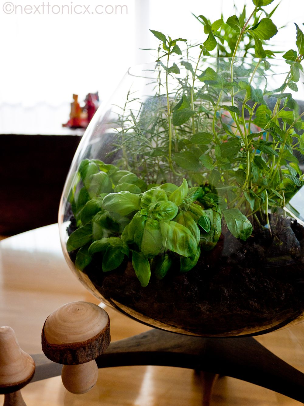Making An Herb Terrarium