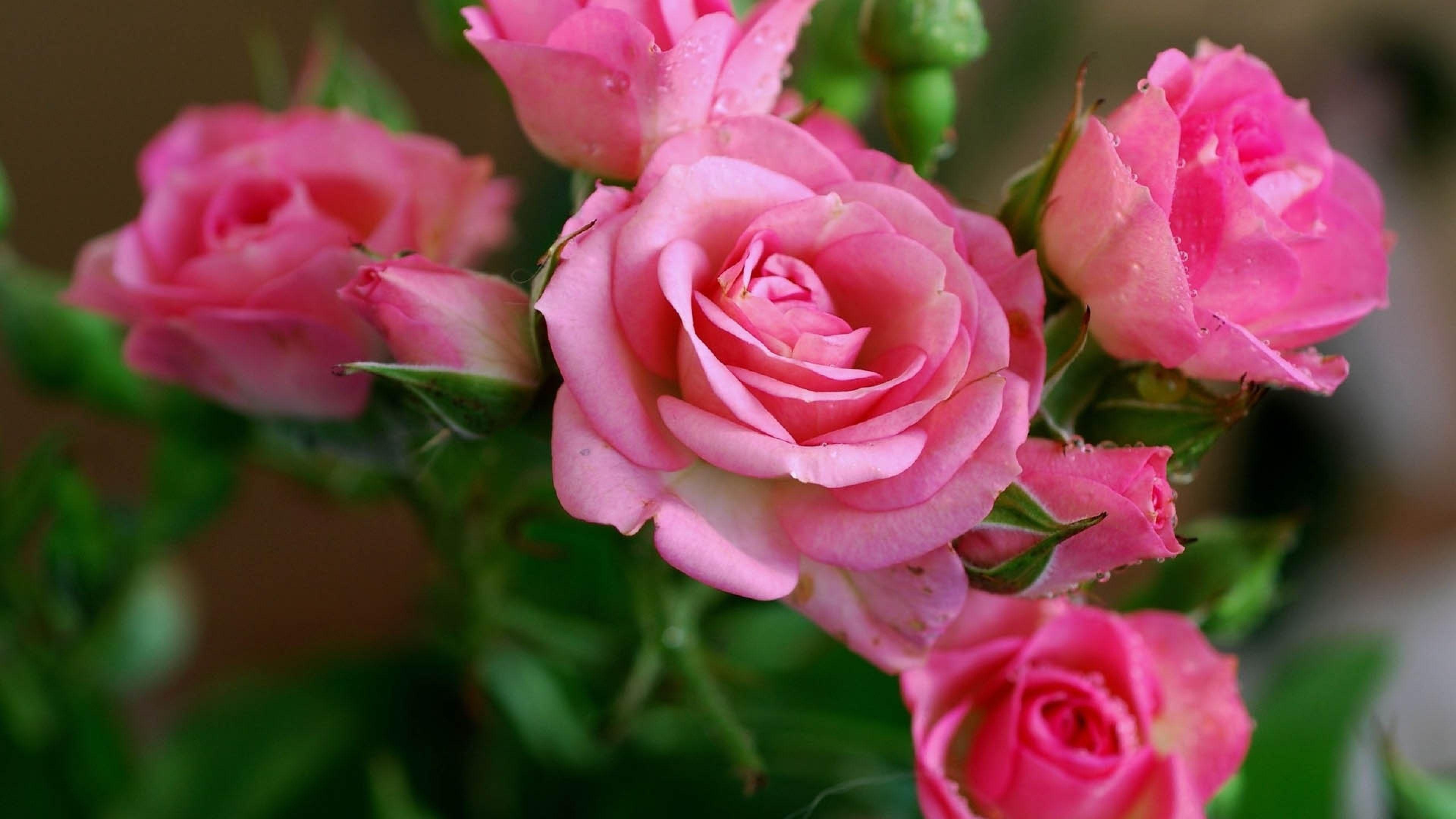 Flowers 4k ultra hd wallpaper wallpaper 3840x2160 rose pink flowers 4k ultra hd wallpaper wallpaper 3840x2160 rose pink flowers bouquet 4k dhlflorist Images