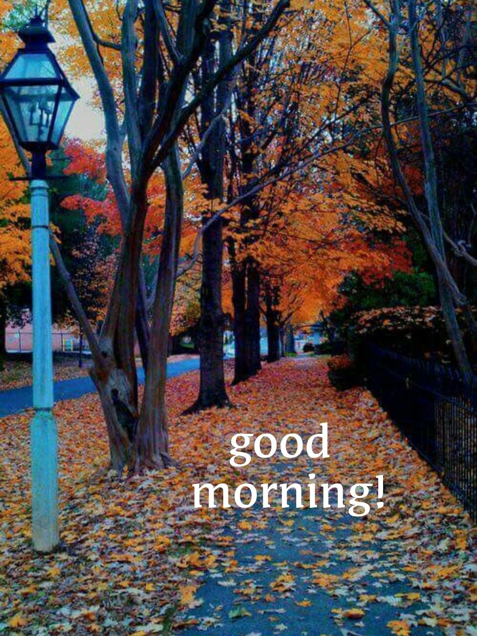 Saraseragmail Com Buon Giorno Morning Pictures Good Morning Good Morning Photos