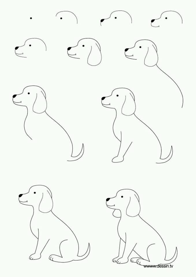 Disini saya akan menyimpan cara cara menggambar hewan tumbuah dan ...