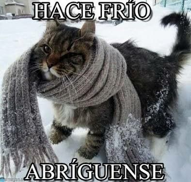 Pin De Patricia Ortiz En Saludos Gatos Bonitos Gatitos Adorables Gatos