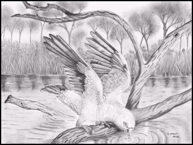 New Scenery Pencil Drawings Pencil Drawings Of Nature Beautiful