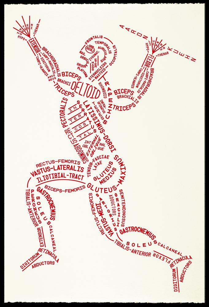 Musculos   APRENDER INGLÉS   Pinterest   Músculos, Fisioterapia y ...