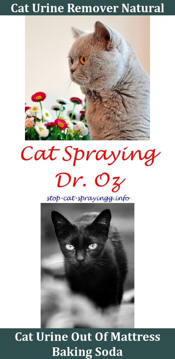 How To Clean Cat Urine From Carpet With Peroxide Taraba