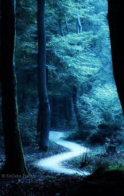 Poem If You Forget Me Pablo Neruda Nature Landscape Photography Forest