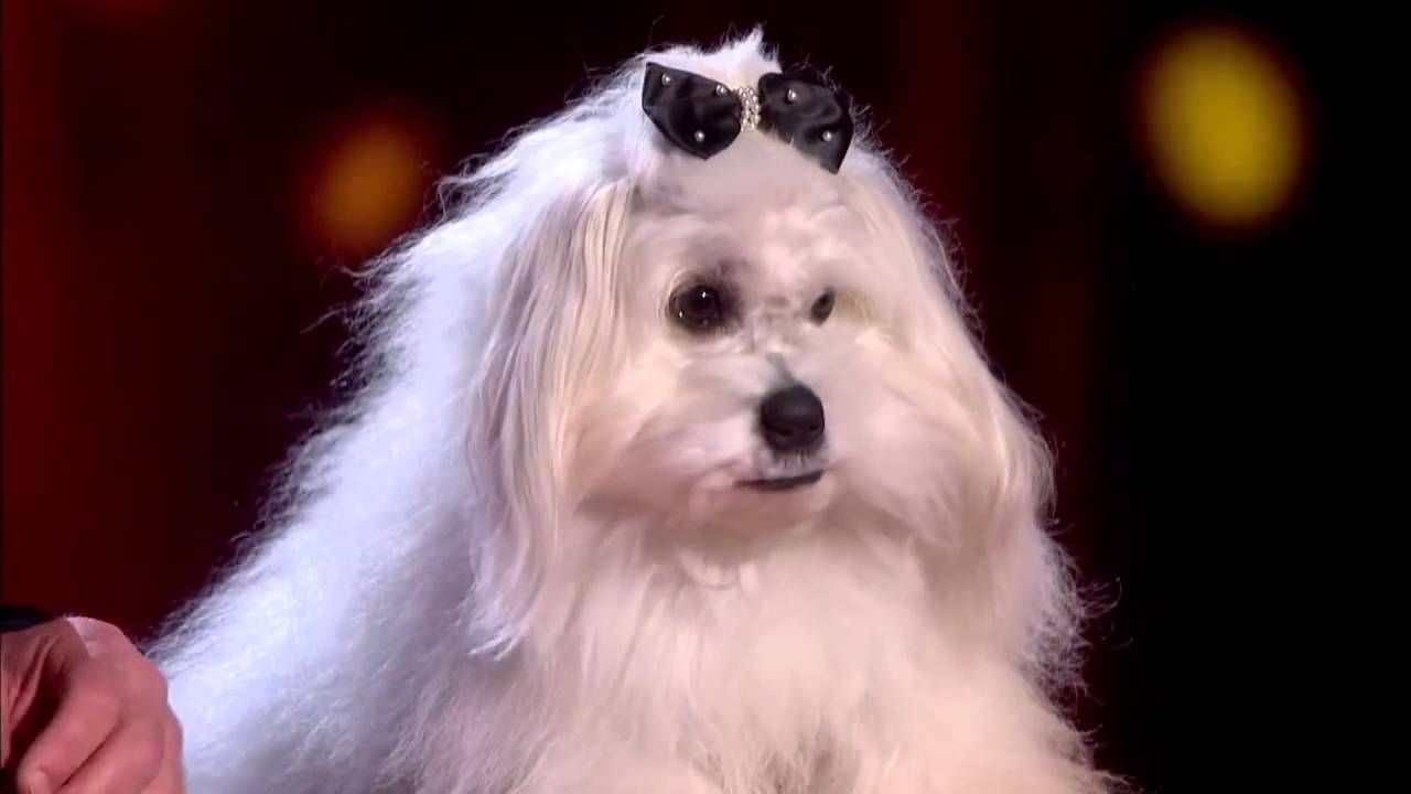 Marc Metral And His Talking Dog Wendy Wow The Judges Audition Week 1 With Images Talking Dog Britain Got Talent Talent