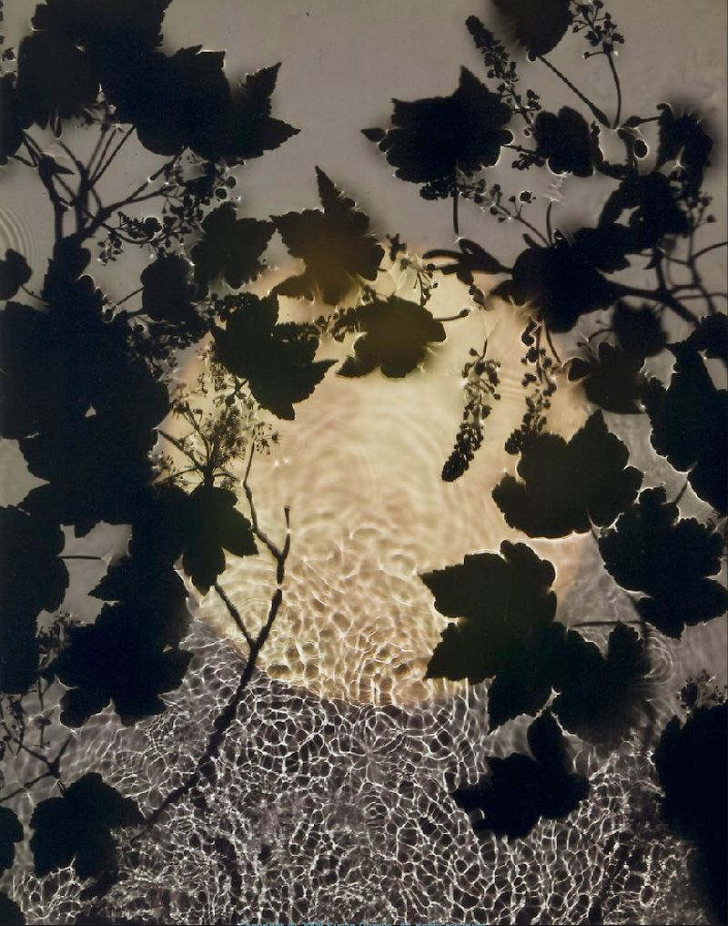 Susan Derges Night Time Photogram River Taw