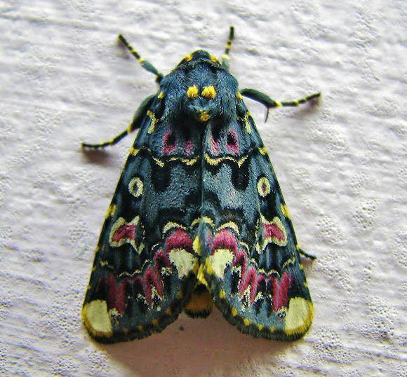 Lilly Moth Com Imagens Borboletas Belas Criaturas Lindas
